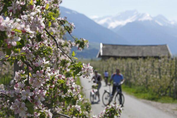 Biken in Südtirol - Rundfahrt durch Lana bei Meran - vom Hotel Pfeiss